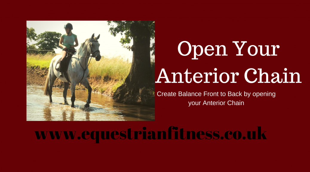 open your anterior chain