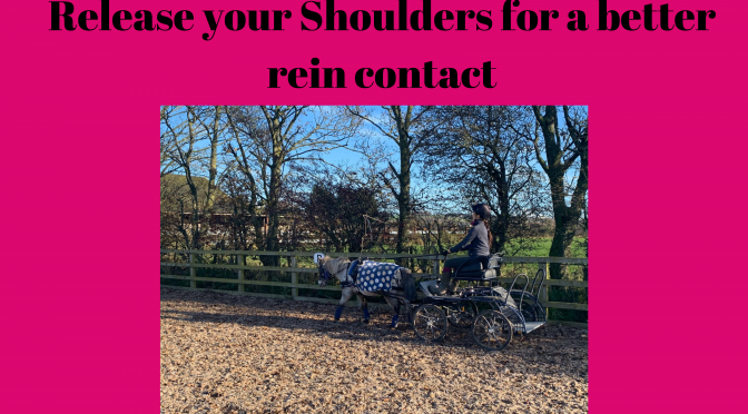 Release Your Shoulders For Better Rein Contact